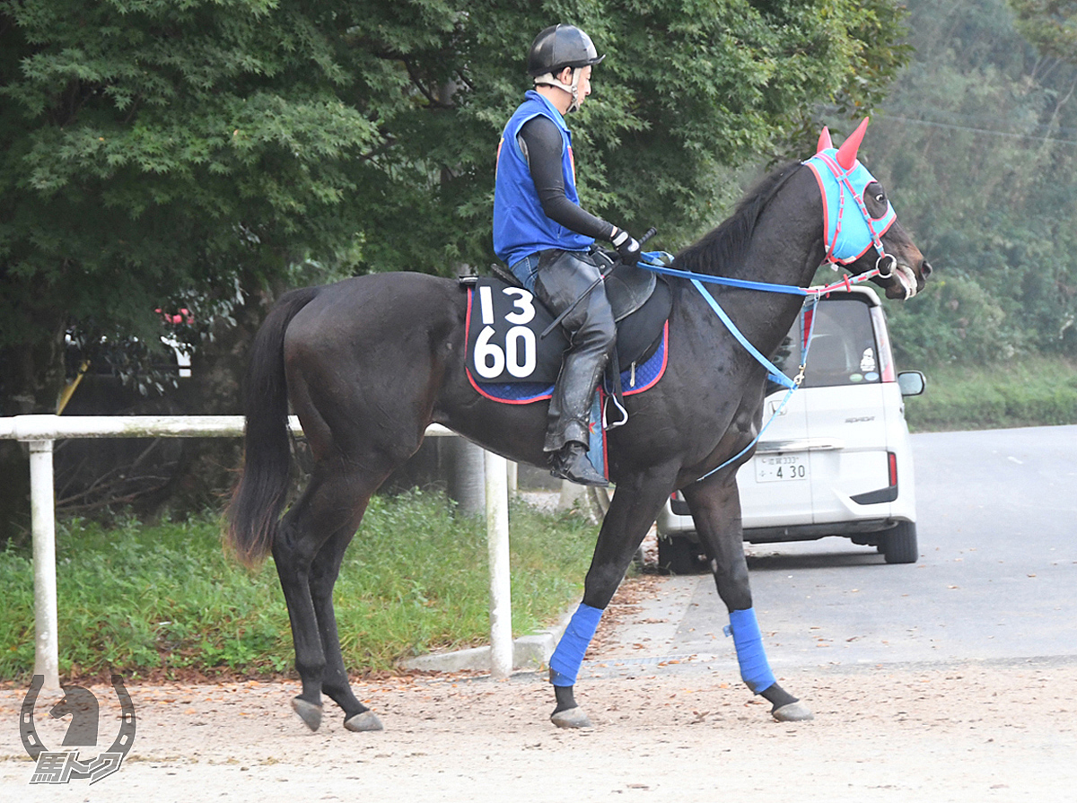 ウインガナッシュの馬体写真