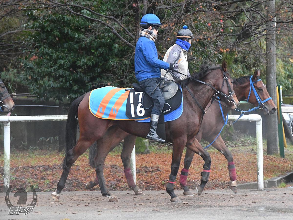 クイーンハーツの馬体写真