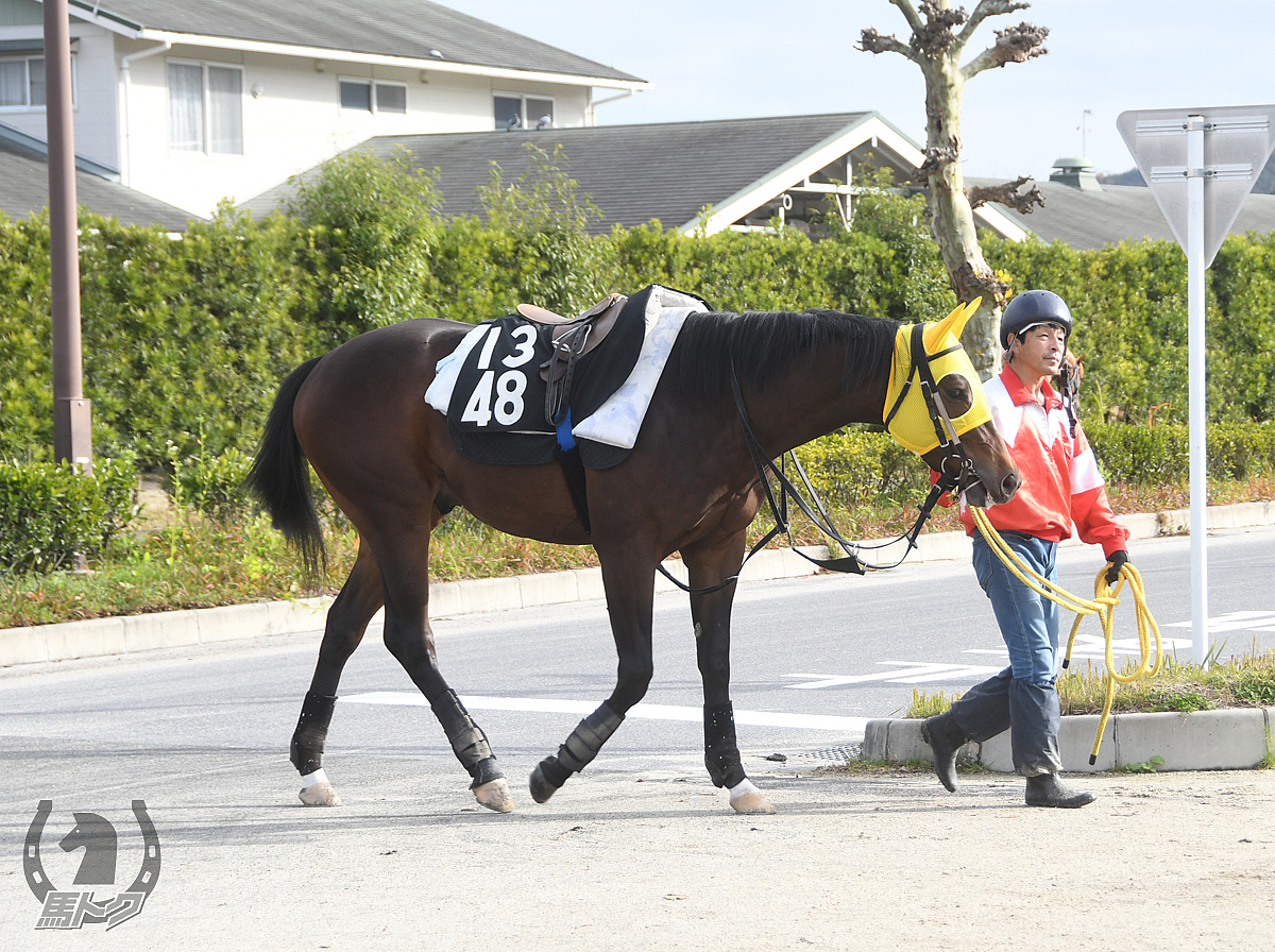 トモジャチャーリーの馬体写真
