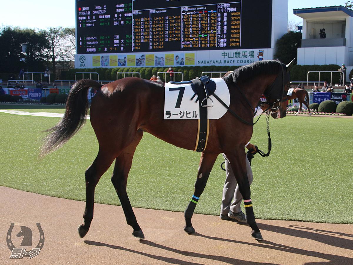 ラージヒルの馬体写真