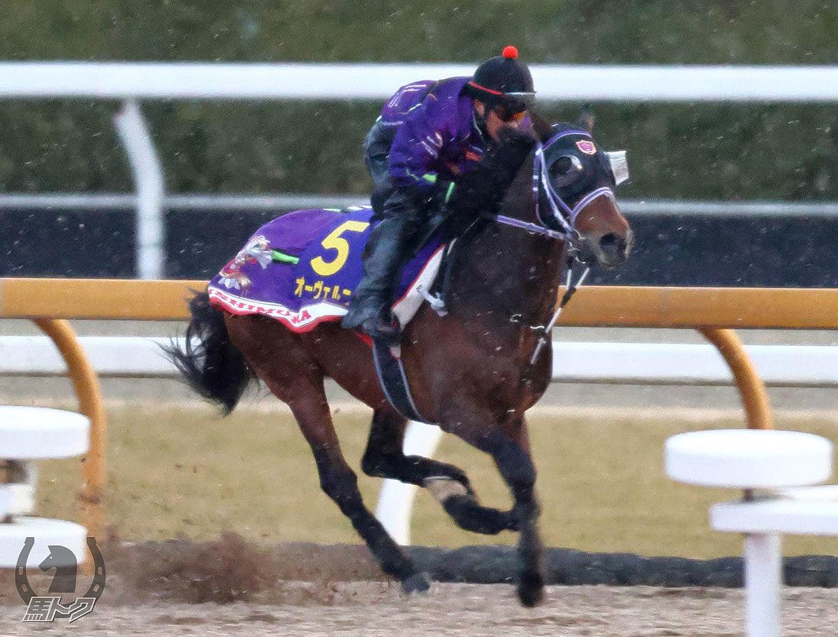 オーヴェルニュの馬体写真