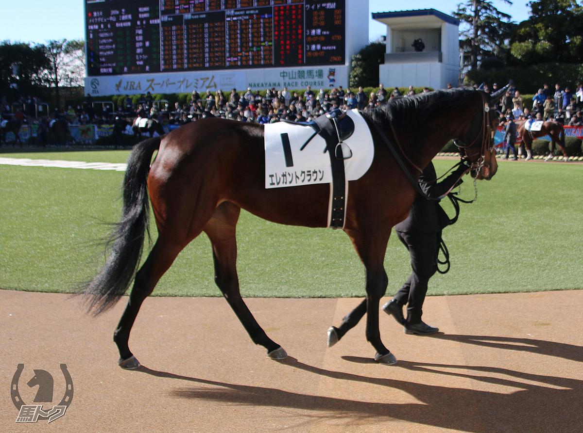 エレガントクラウンの馬体写真