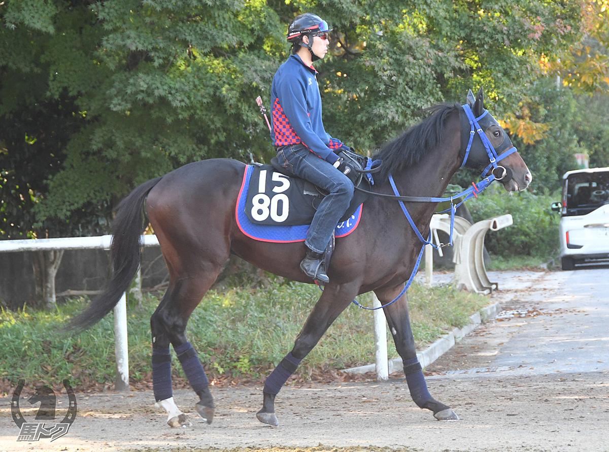 アレジェンスの馬体写真