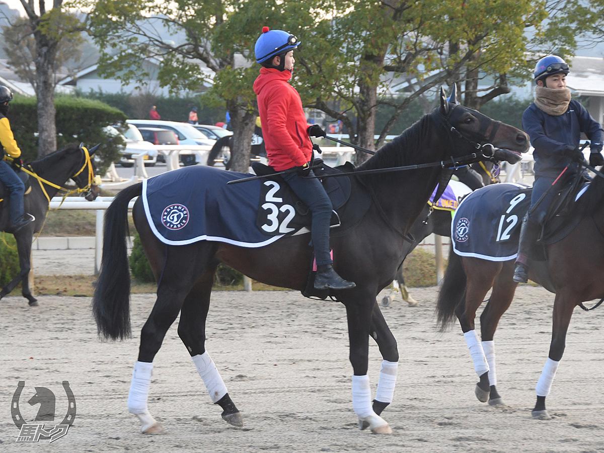 カムアップロージズの馬体写真