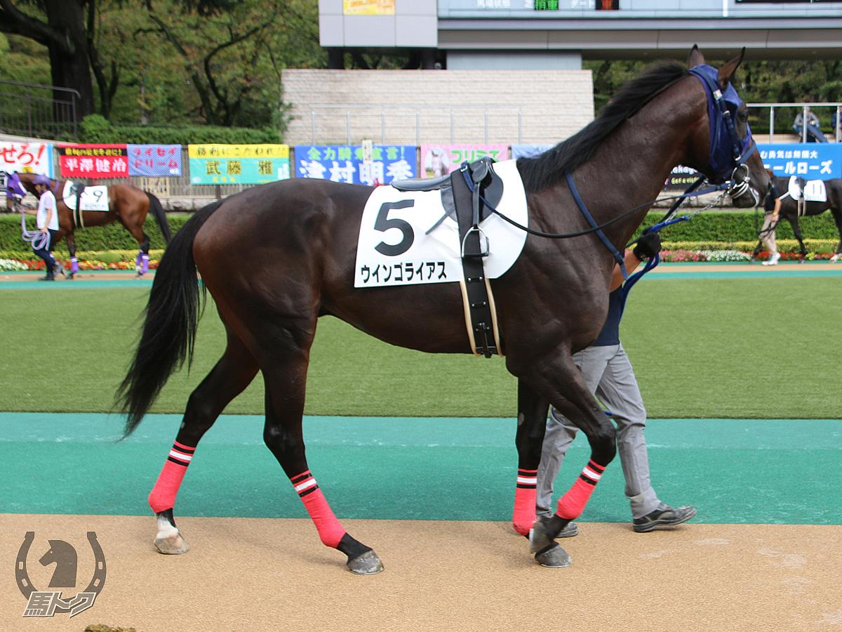 ウインゴライアスの馬体写真