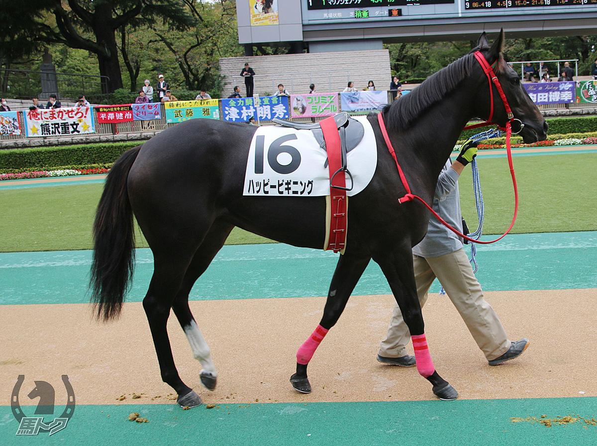 ハッピービギニングの馬体写真