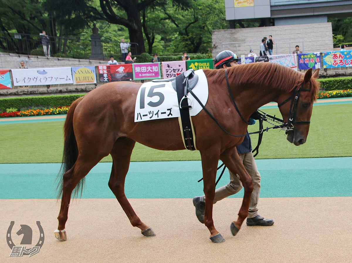 ハーツイーズの馬体写真