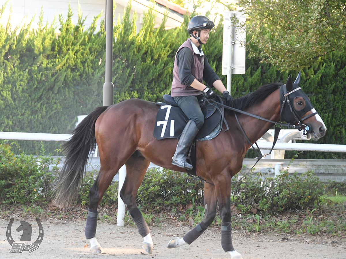 パドカトルの馬体写真