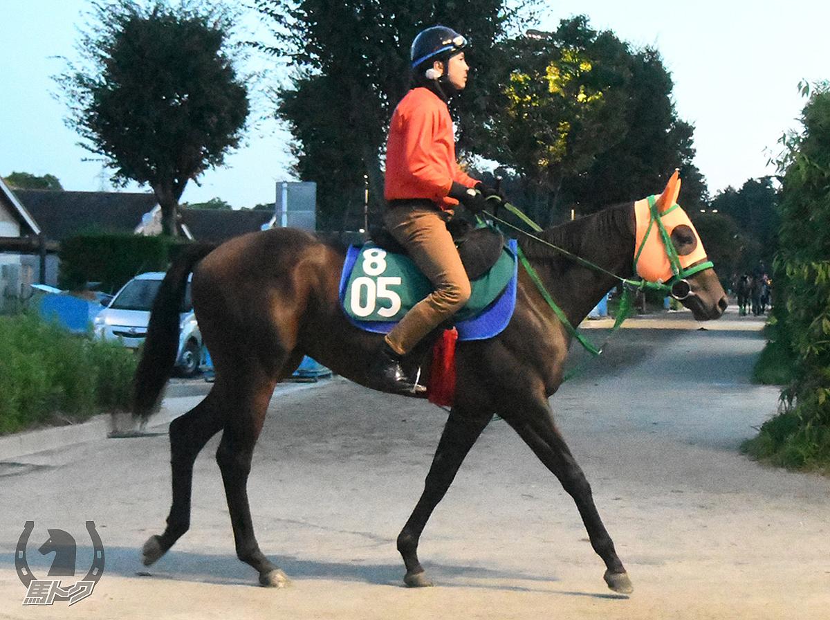ケントホープの馬体写真