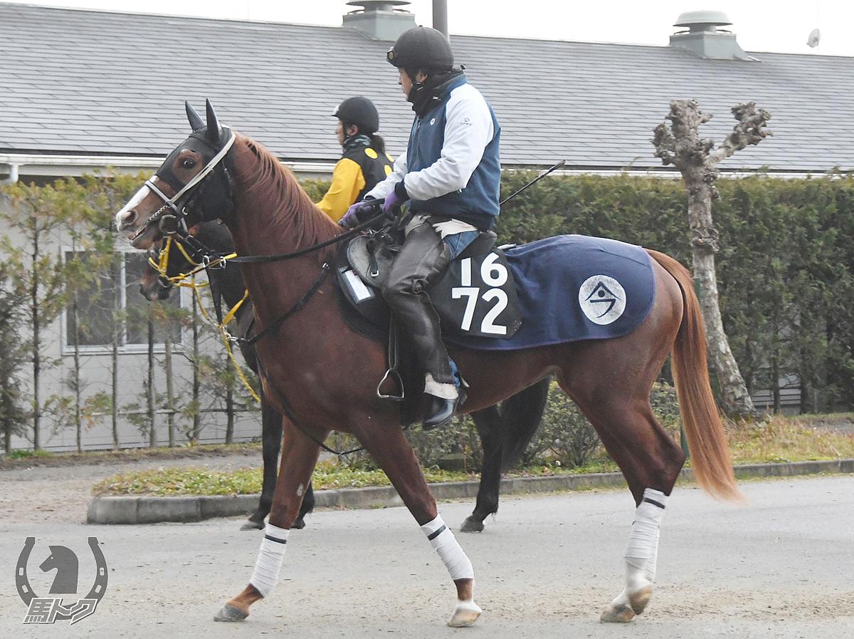 ワンダールウェスの馬体写真