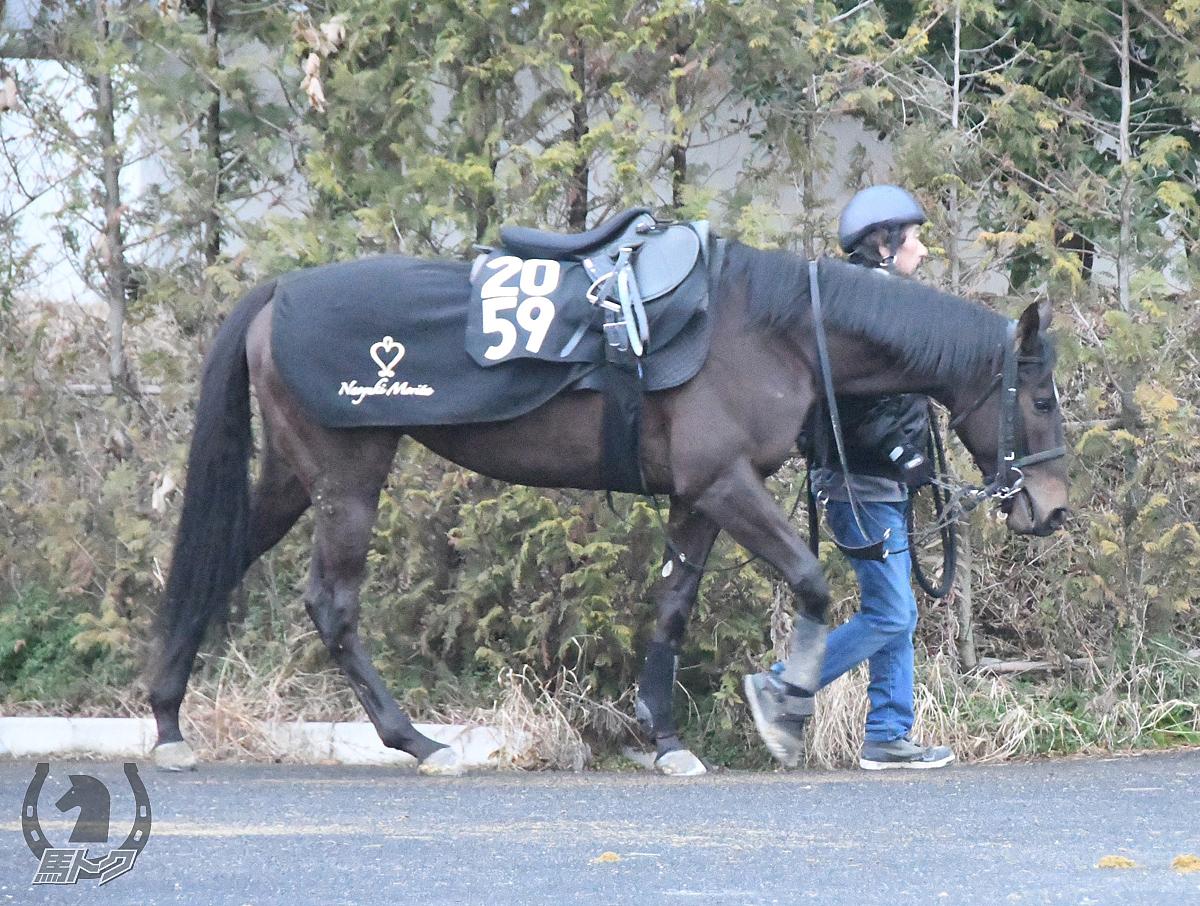 ワンダーグロウスの馬体写真