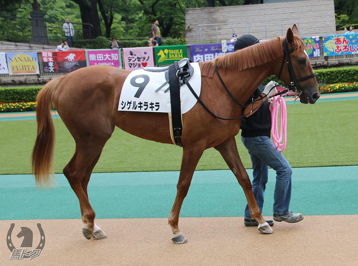 シゲルキラキラの馬体写真