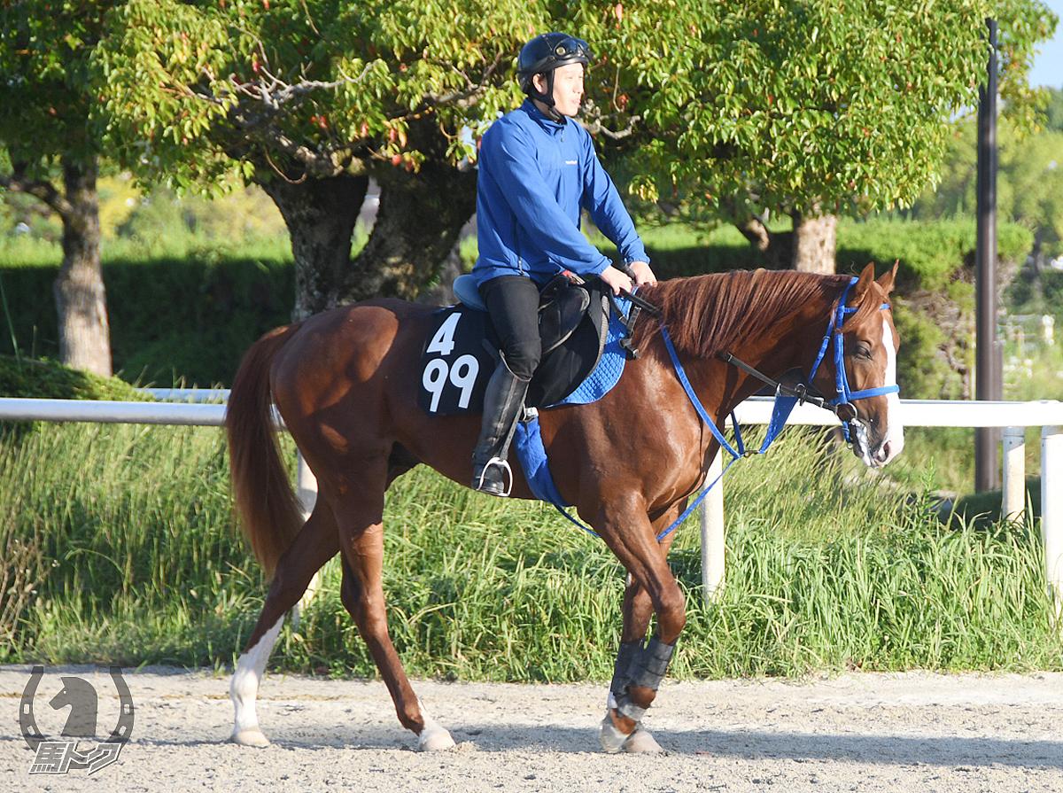 スズカブランコの馬体写真