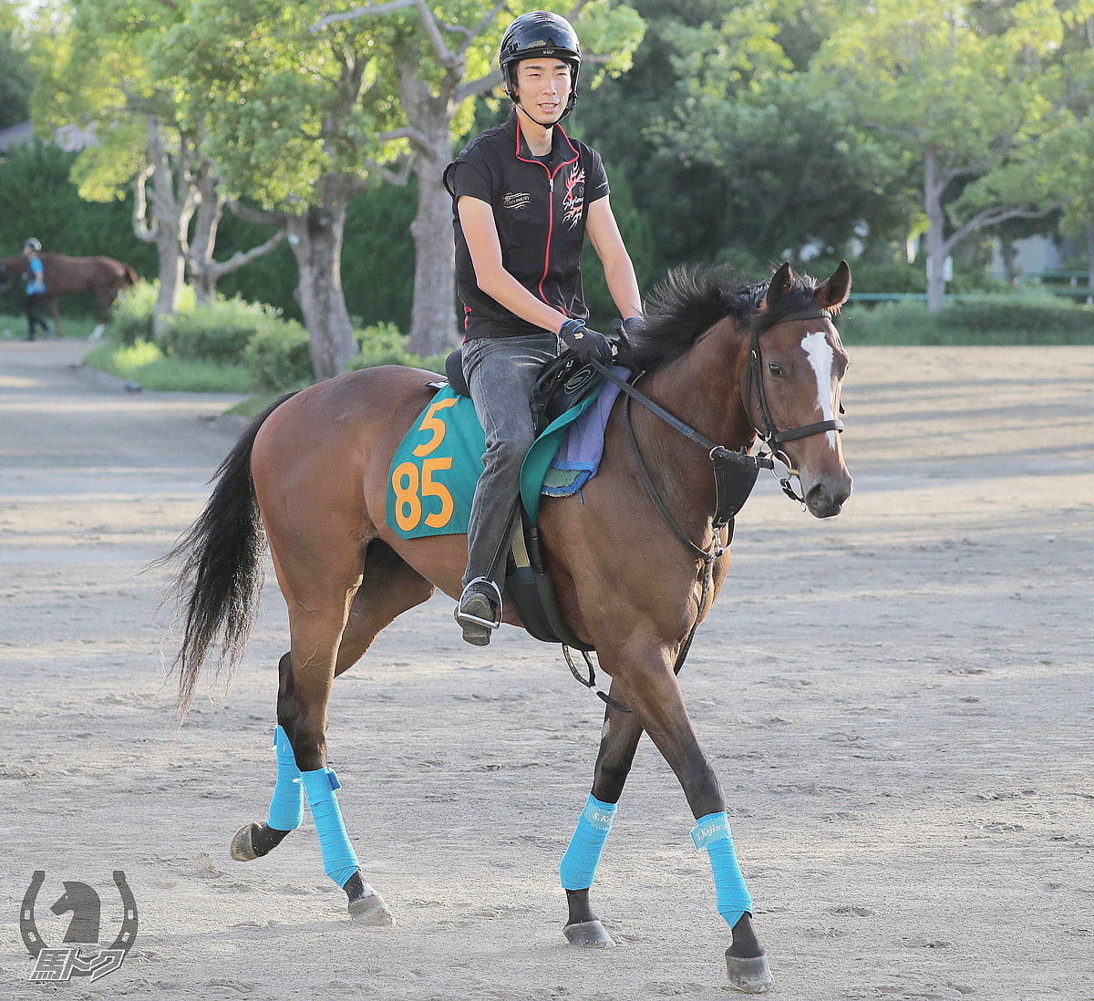 スティルネスの馬体写真
