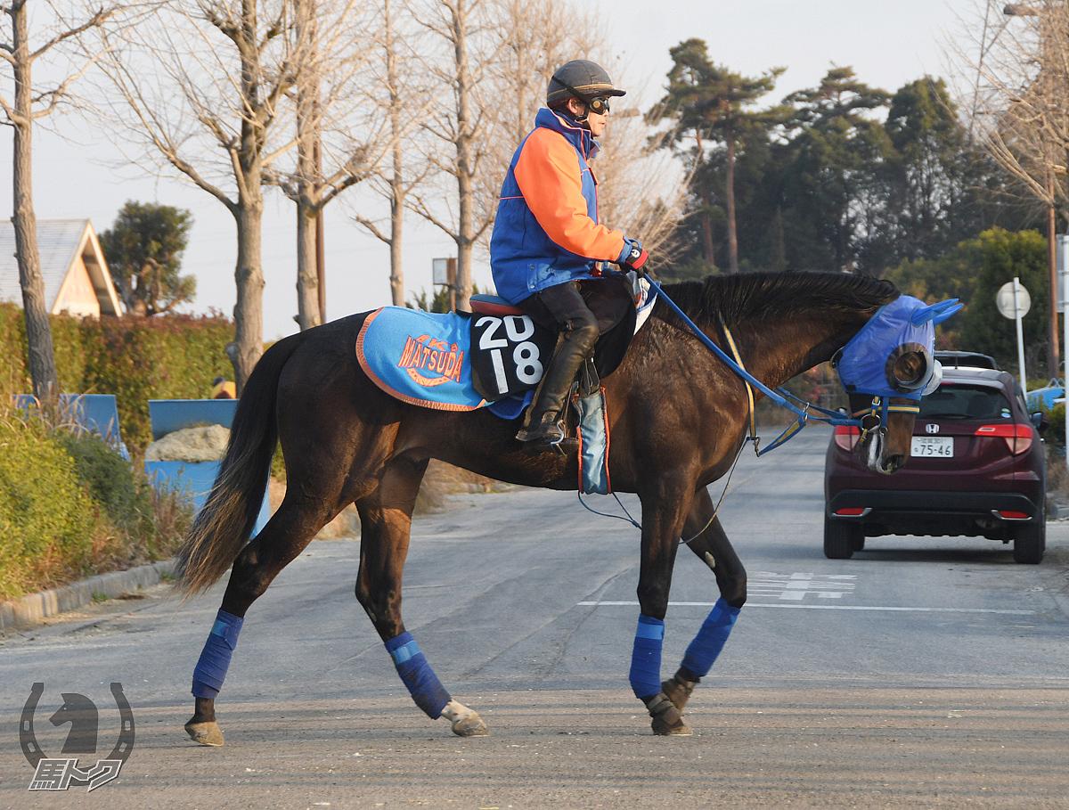 オルディーインラヴの馬体写真