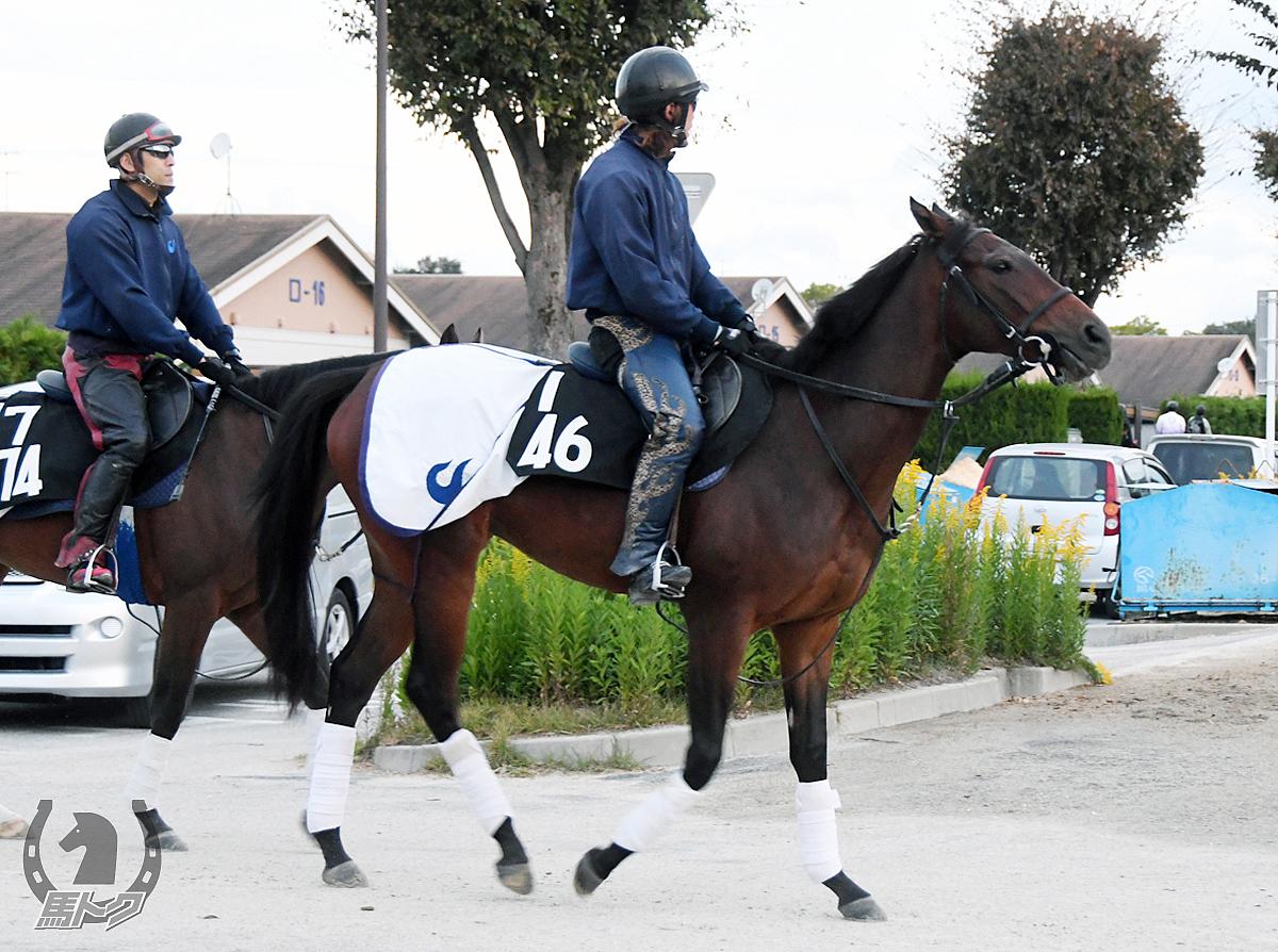 エアビオンディの馬体写真