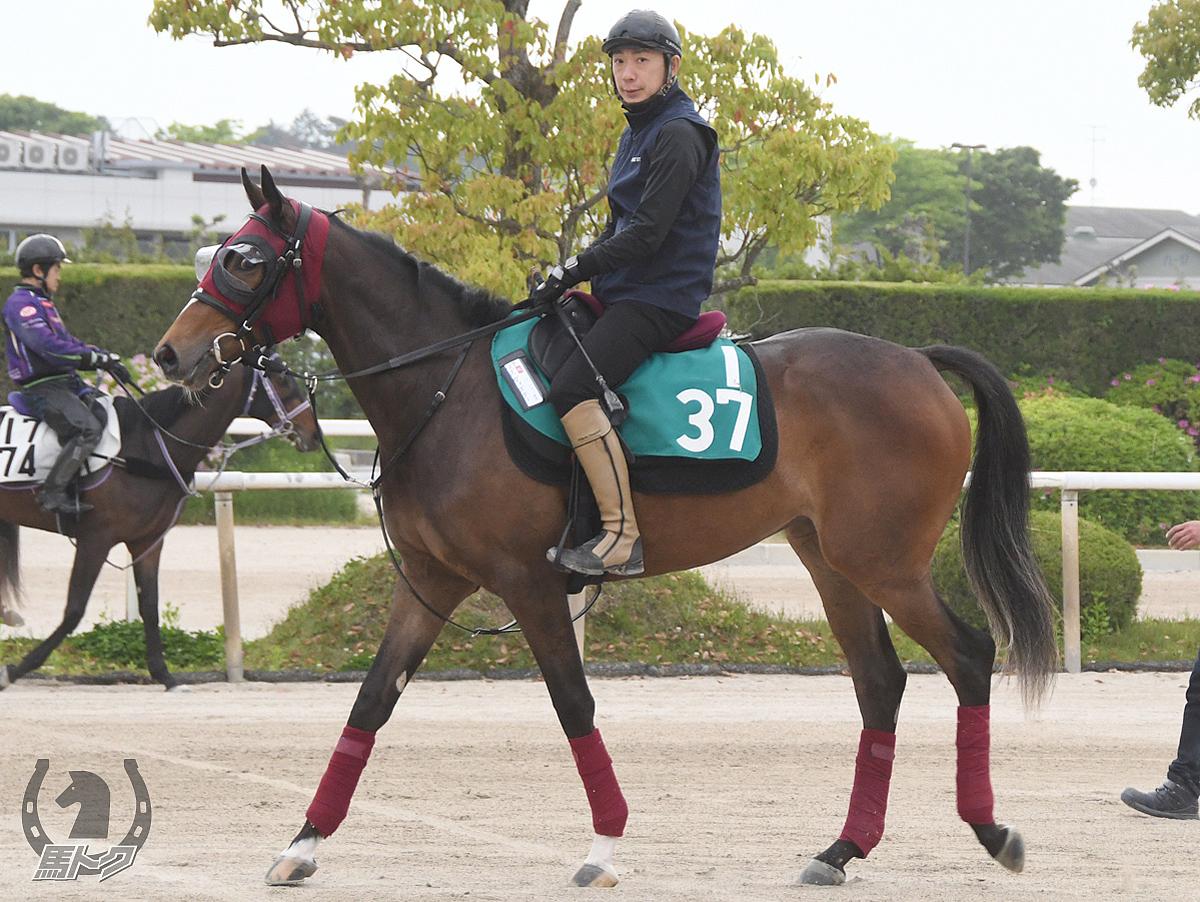 ズヴィズダーの馬体写真