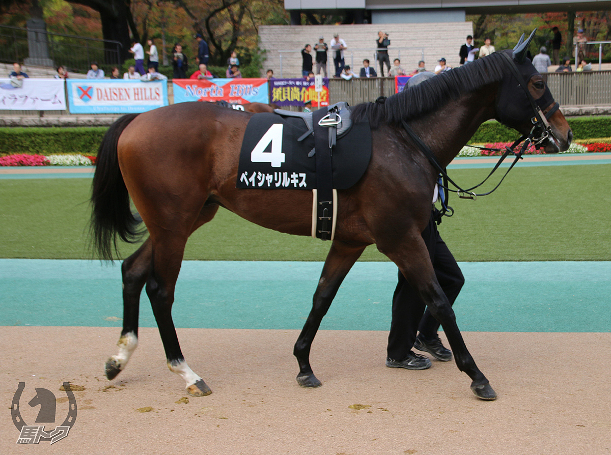 ペイシャリルキスの馬体写真
