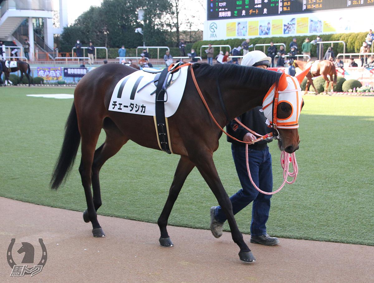 チェータシカの馬体写真