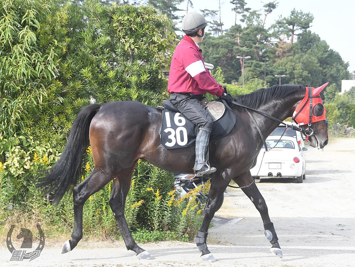 エイユーラトゥールの馬体写真