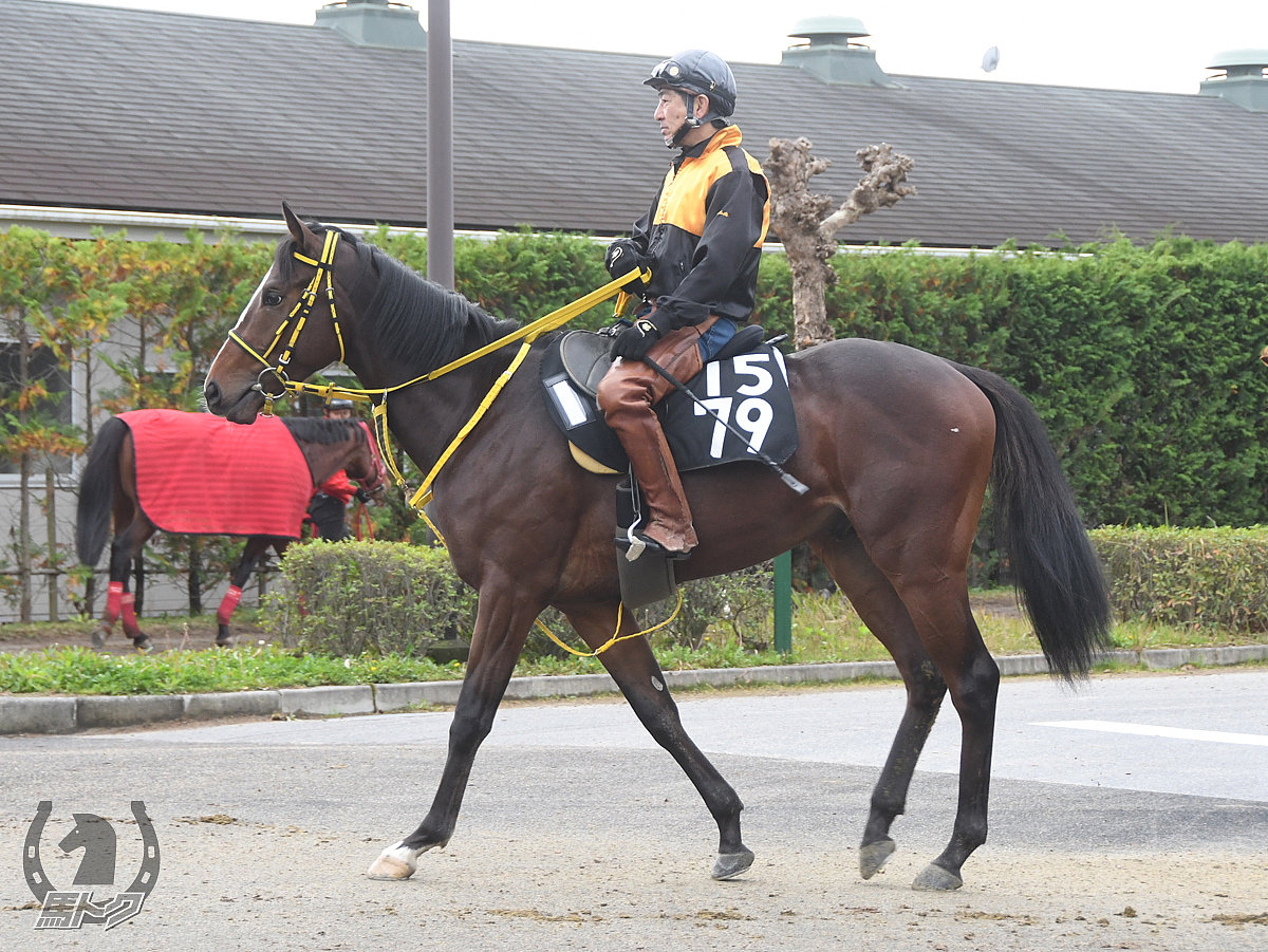 ウォーターファラオの馬体写真