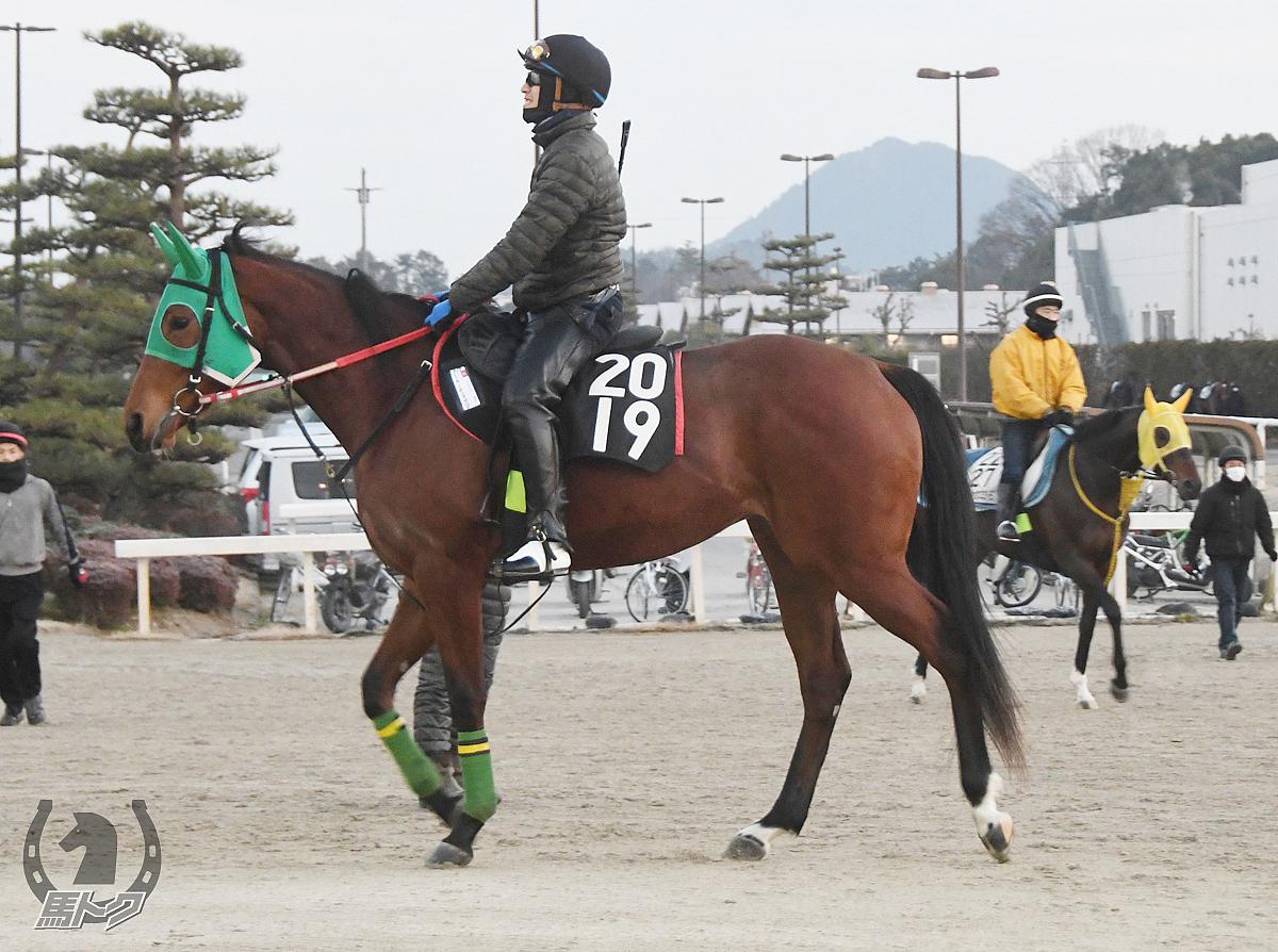 ミキノモンテカルロの馬体写真