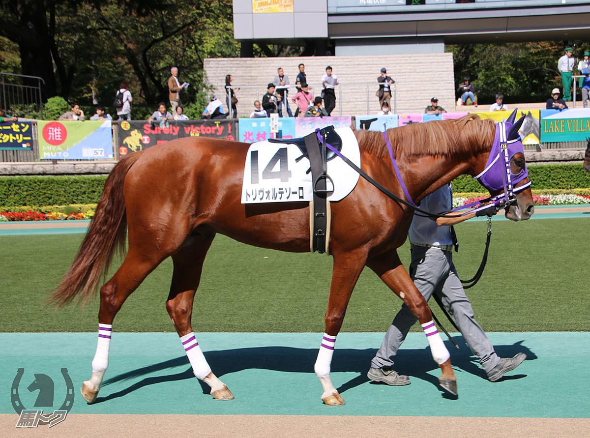 トリヴォルテソーロの馬体写真