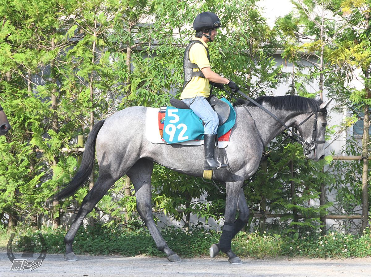 クールジェンヌの馬体写真