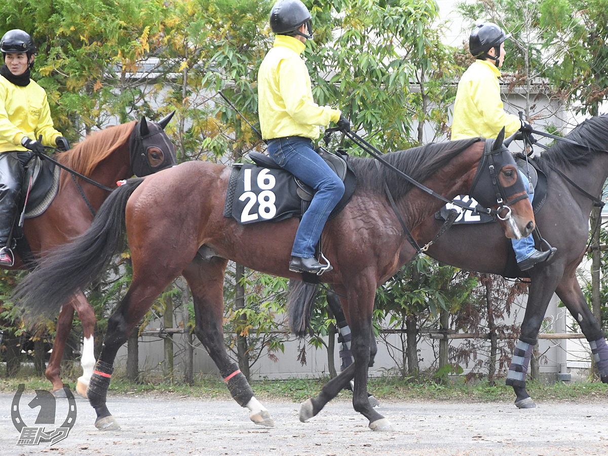 ラッキーグランの馬体写真