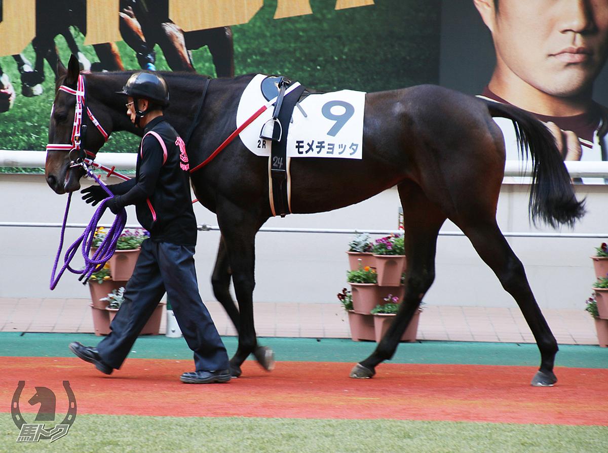 モメチョッタの馬体写真