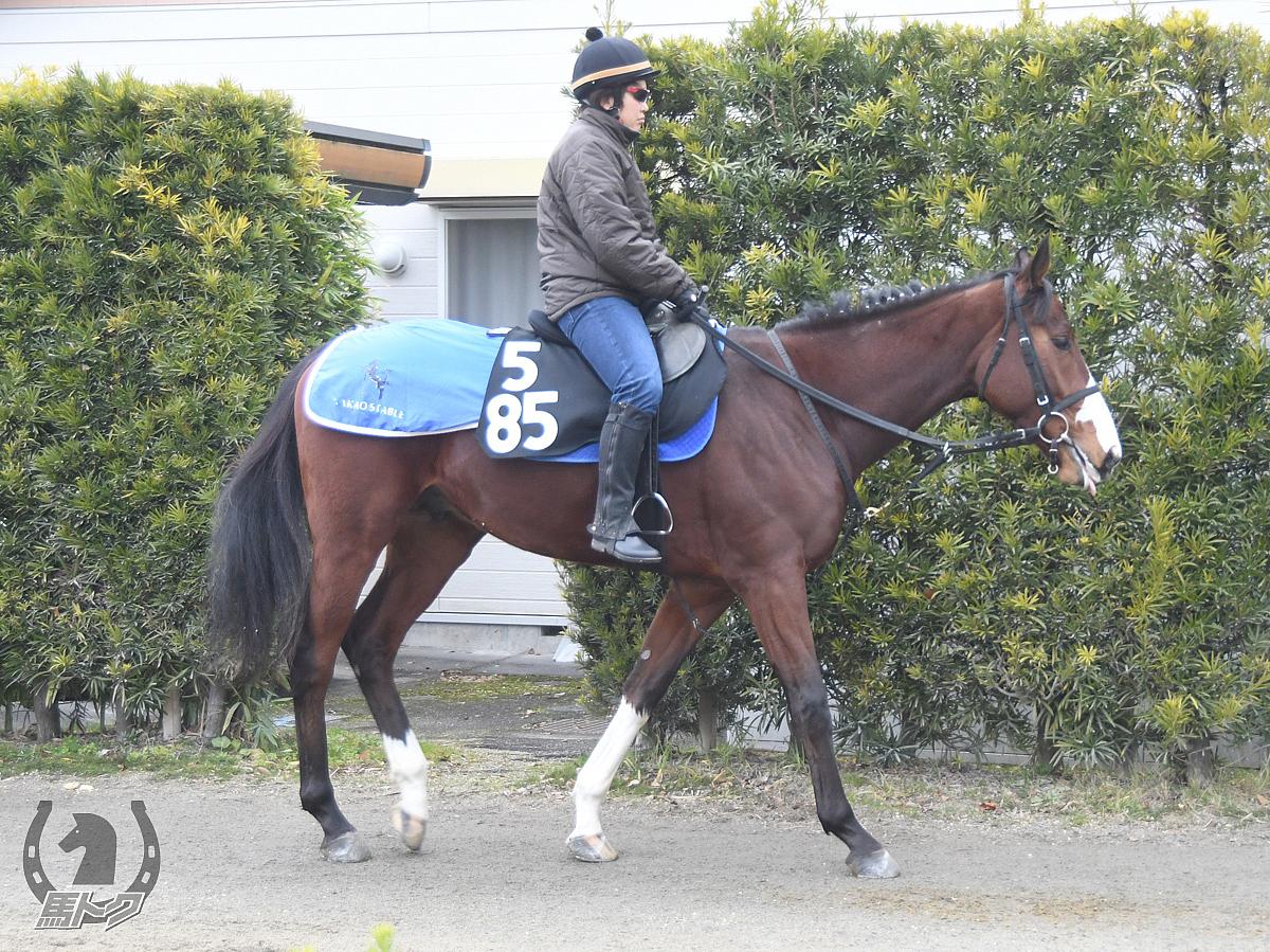 タガノジャイアントの馬体写真