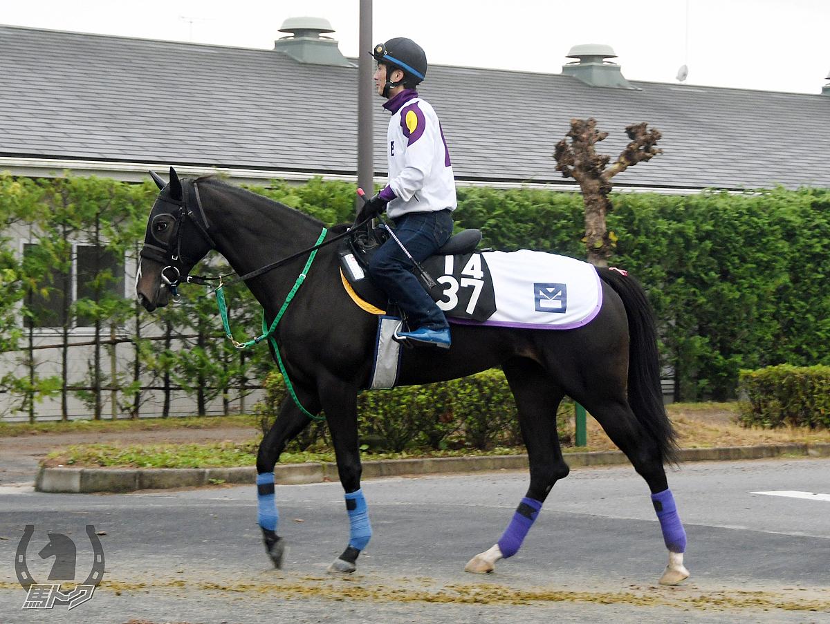 エイシンオルデンの馬体写真