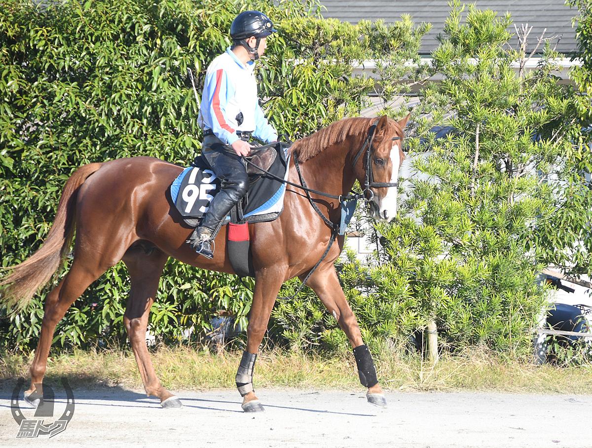 エイシンゴエモンの馬体写真
