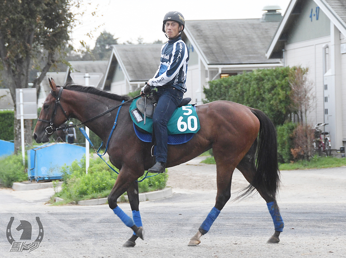 エイシンノホシの馬体写真