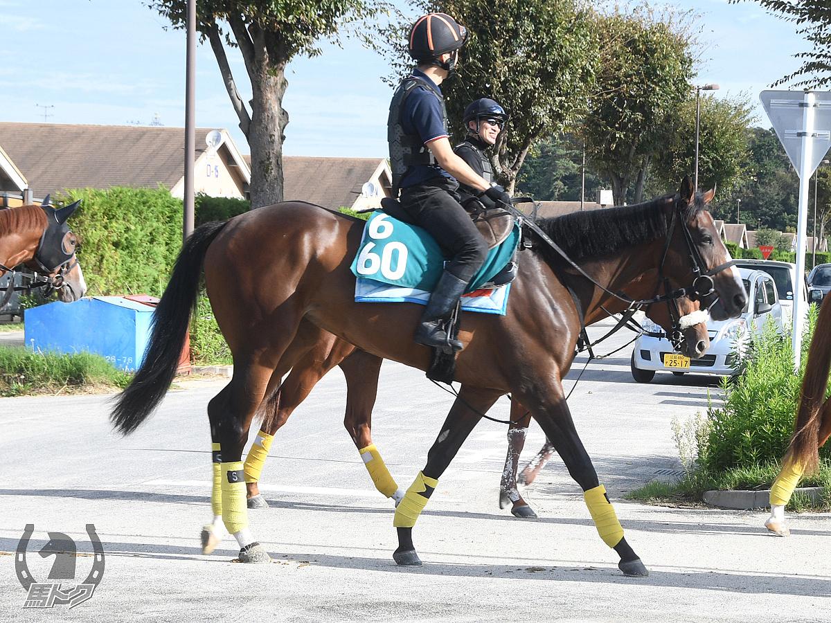 エンゼルサンライズの馬体写真
