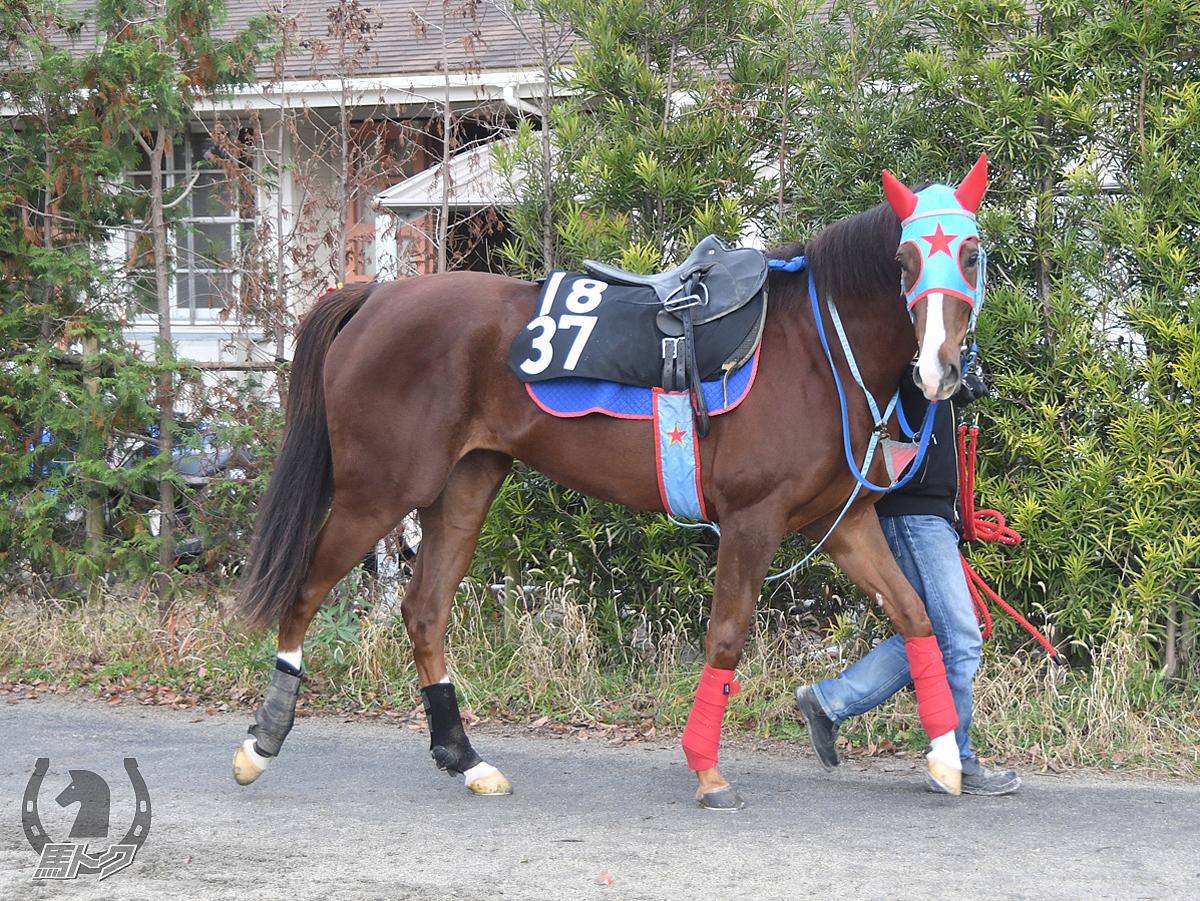 エイシンホープの馬体写真