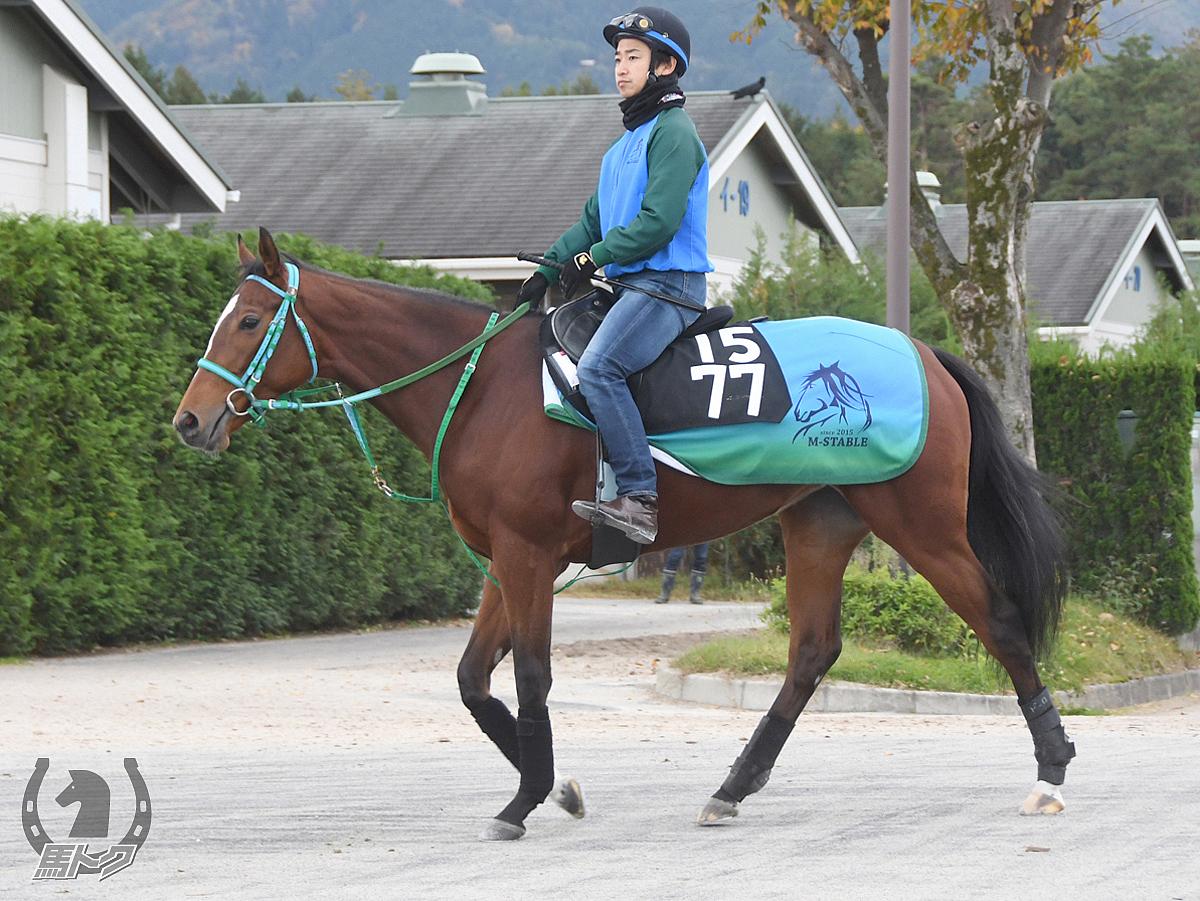 イルヴェントドーロの馬体写真