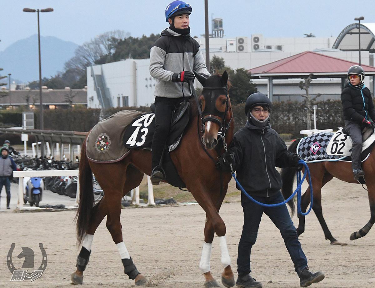 エイシントドロキの馬体写真