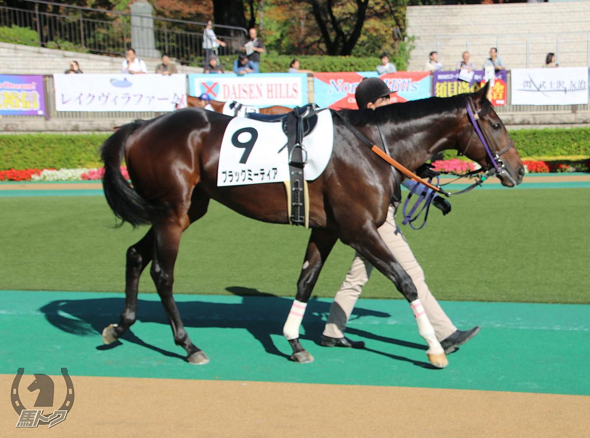 ブラックミーティアの馬体写真