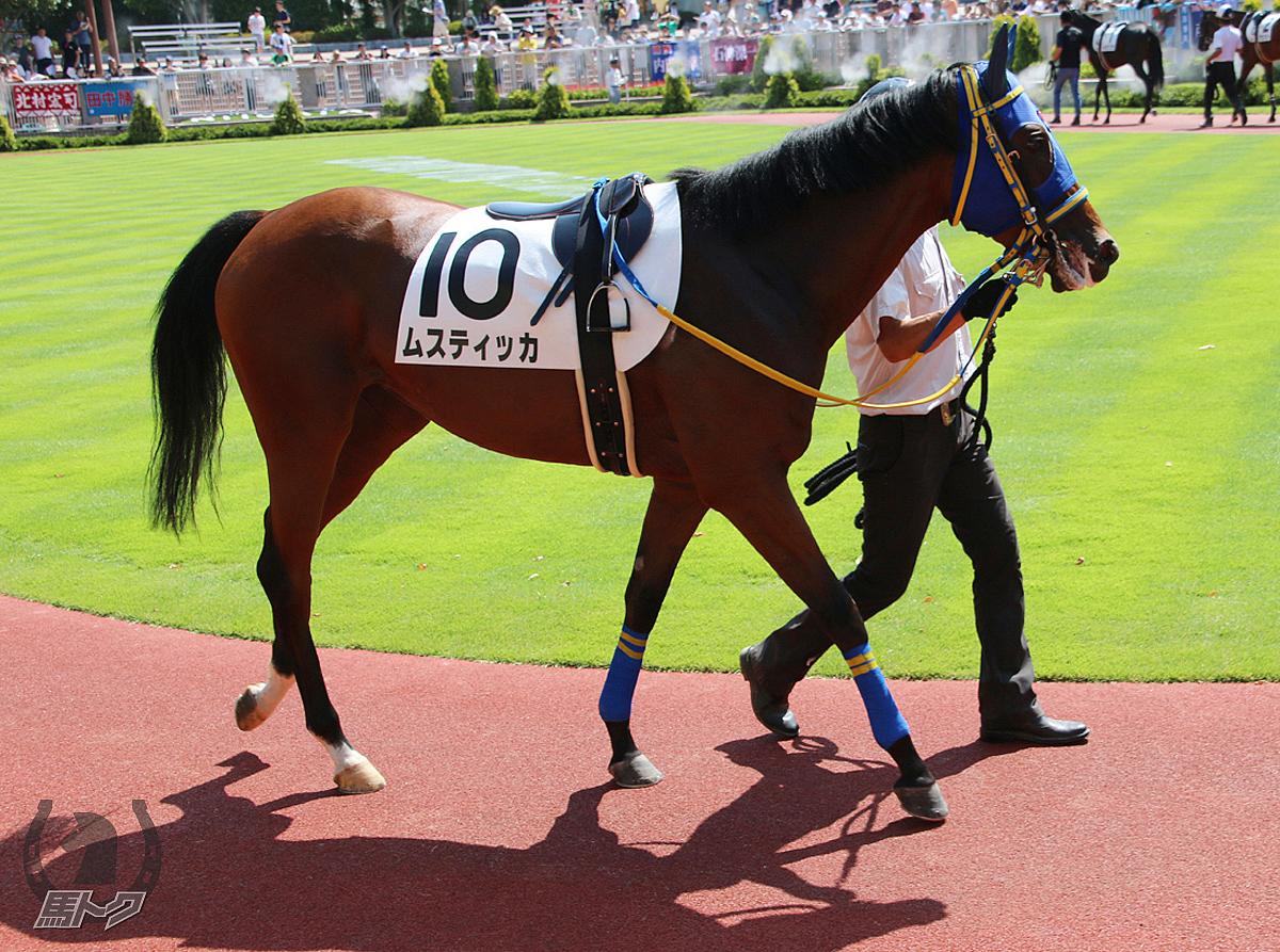 ムスティッカの馬体写真