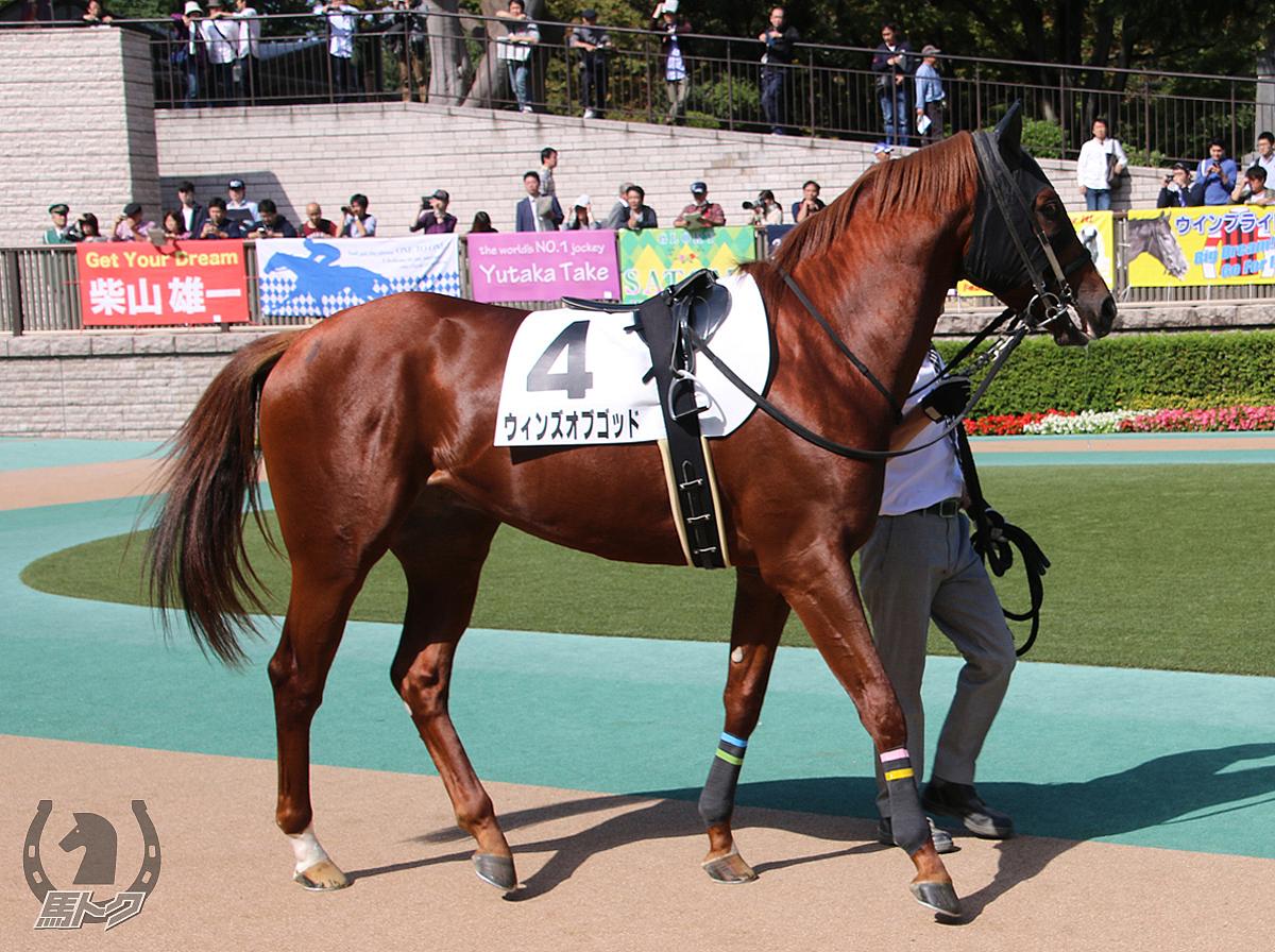 ウィンズオブゴッドの馬体写真
