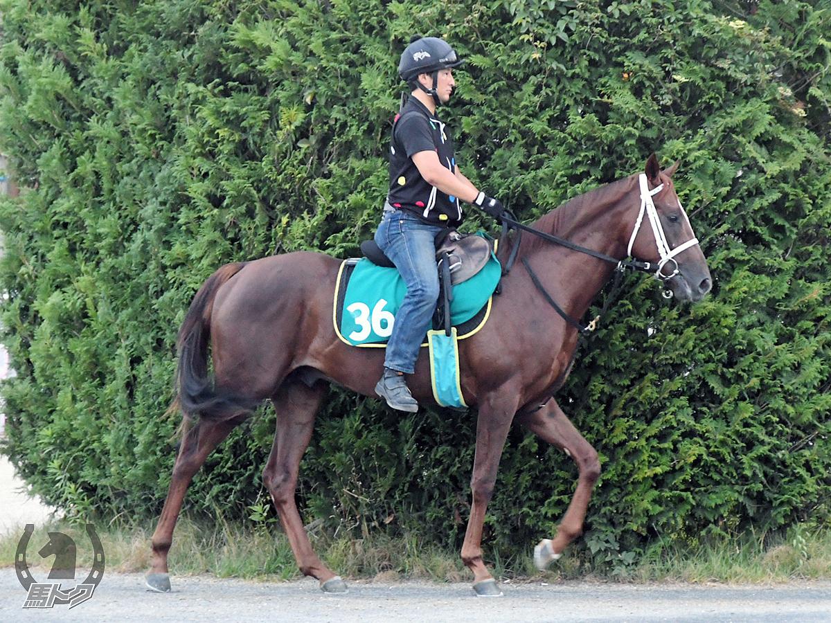 エーティースイセイの馬体写真