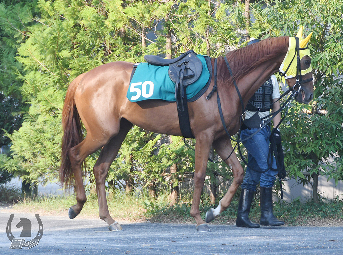 ケアレスラヴの馬体写真