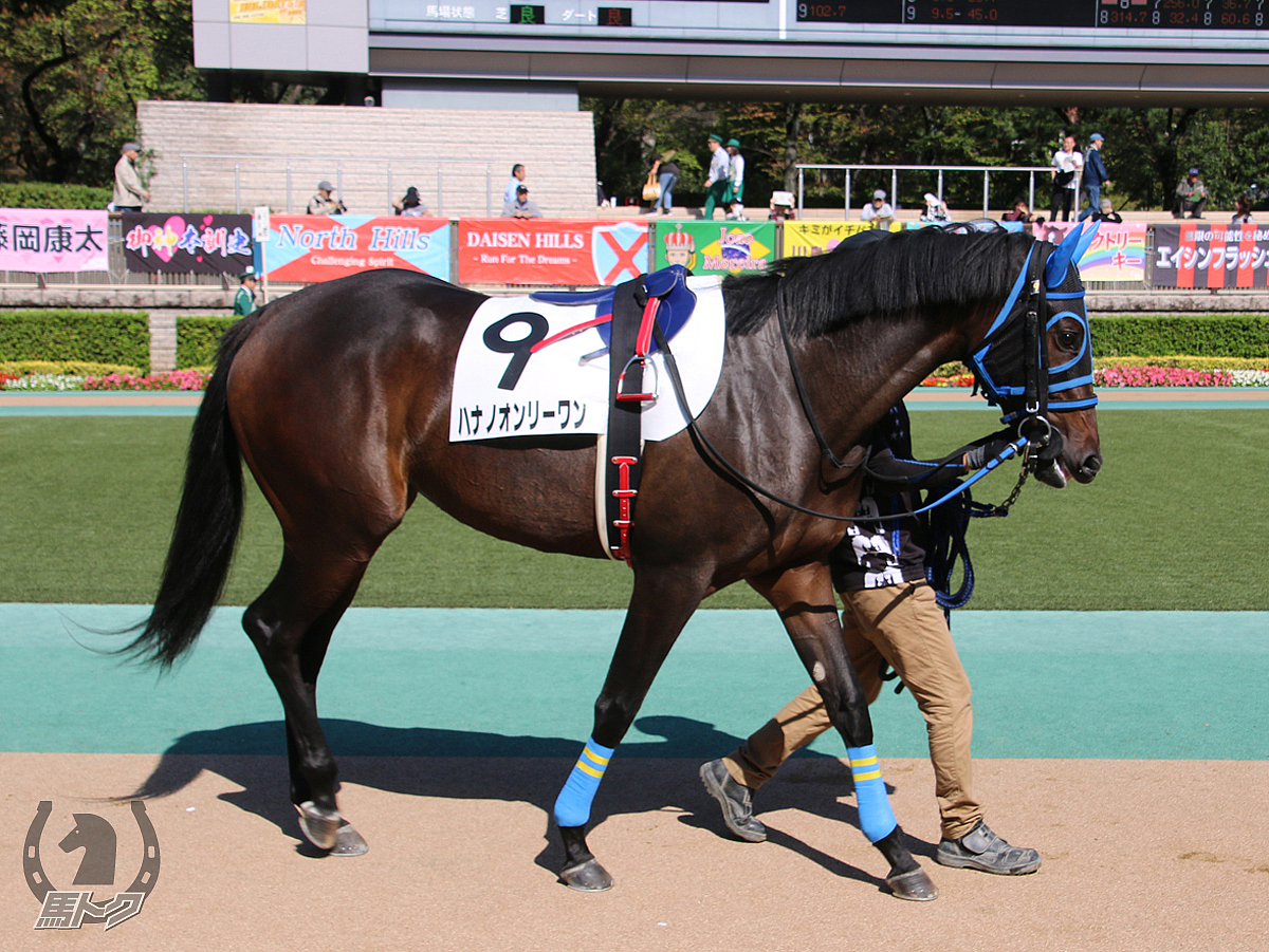 ハナノオンリーワンの馬体写真