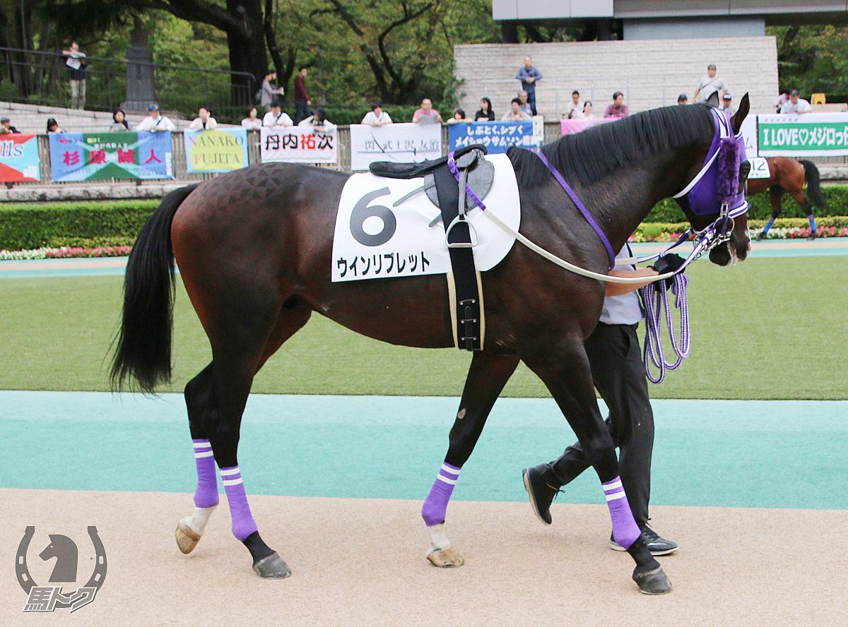 ウインリブレットの馬体写真