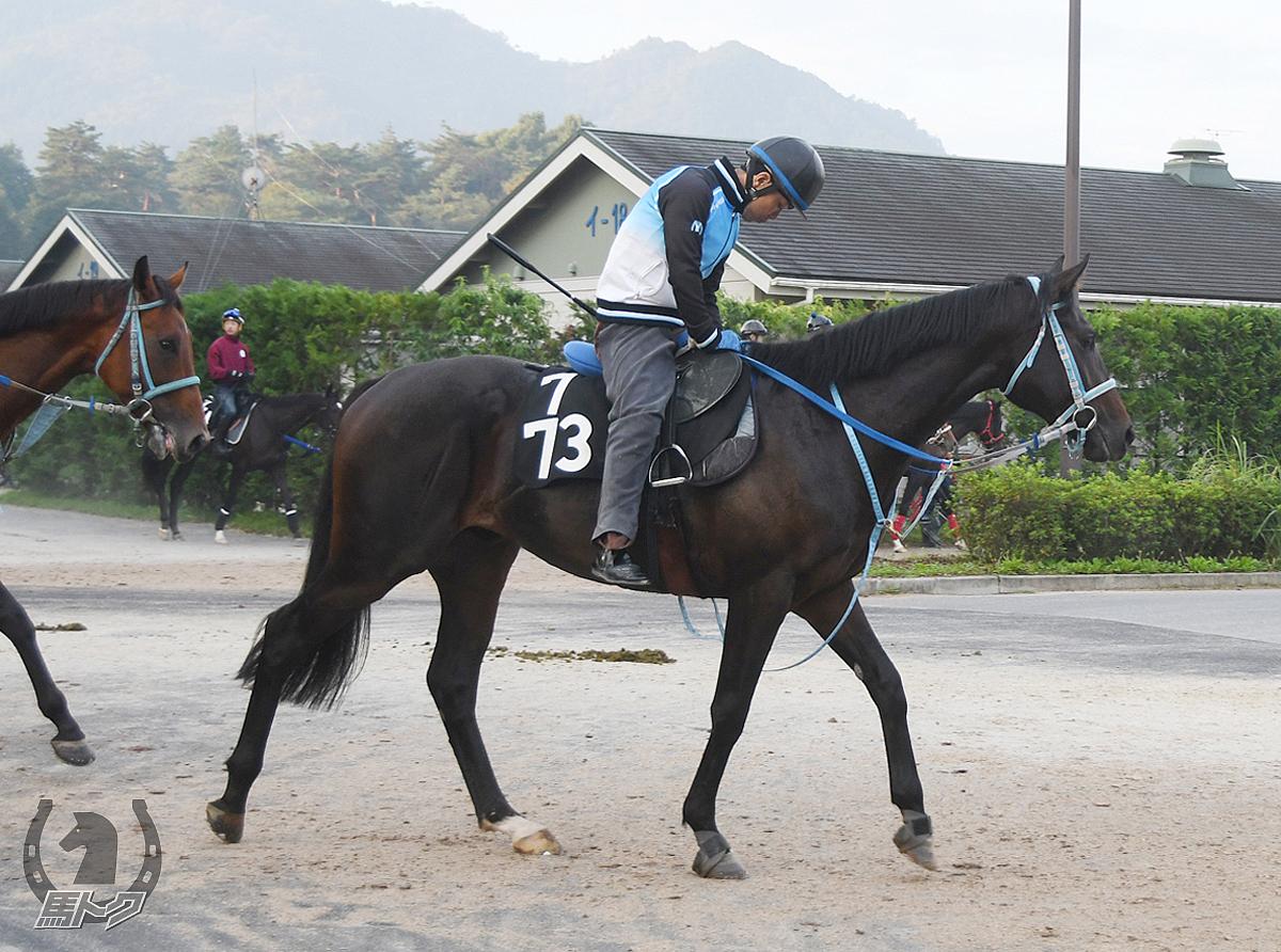 バトルアグレッシブの馬体写真