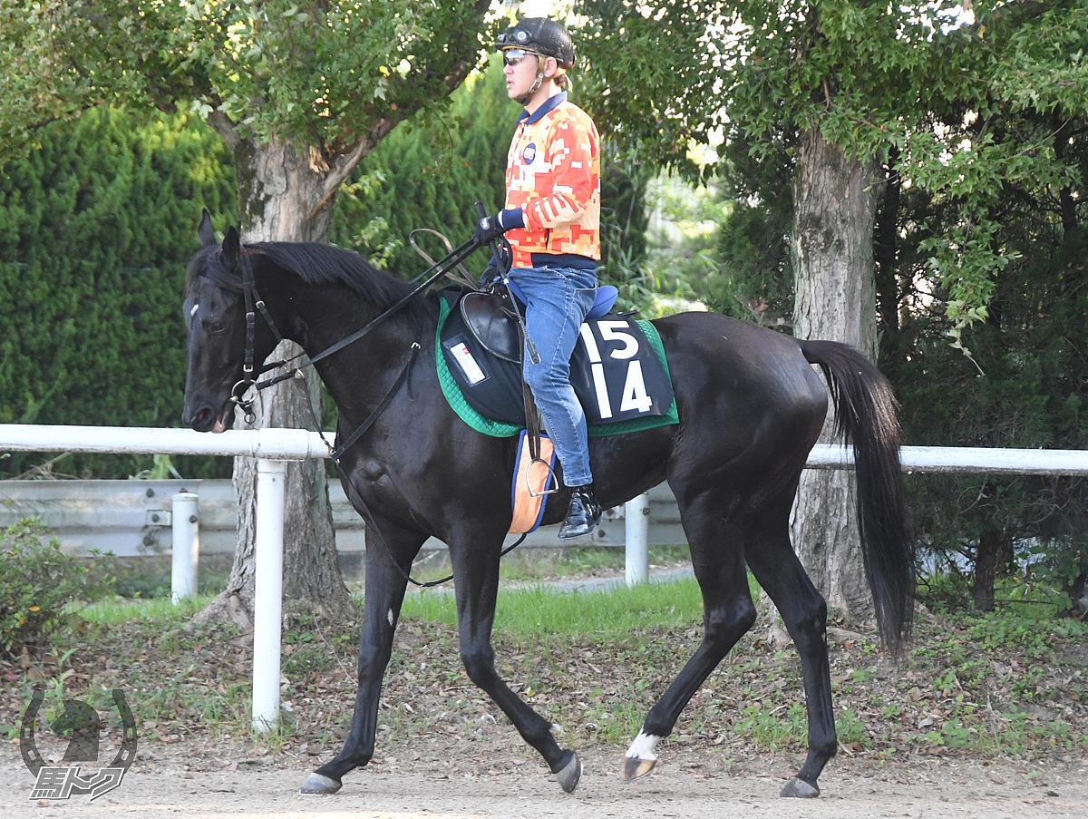 セレッソノワールの馬体写真