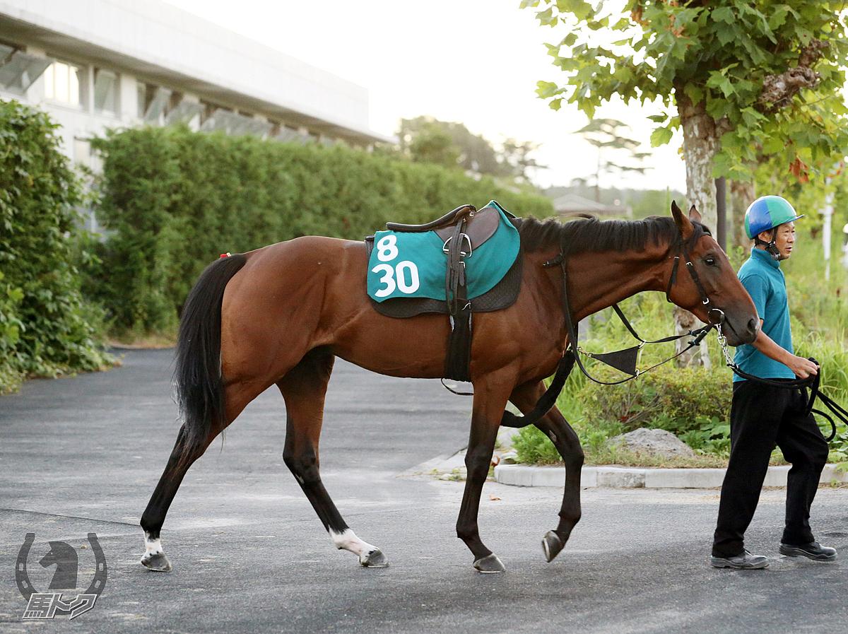 ゲンパチルシファーの馬体写真