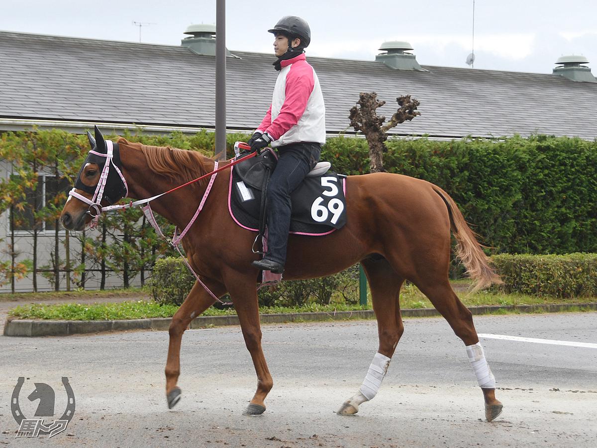タイセイレオーネの馬体写真