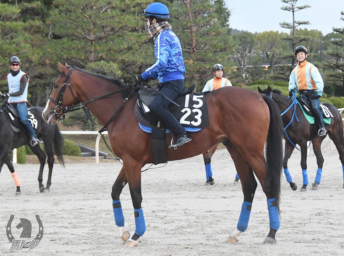 カズフォークナーの馬体写真